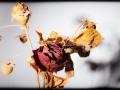 29062016-IMG_7197-rose-2004-phb