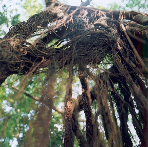 fuli-01-arbre-a-liane