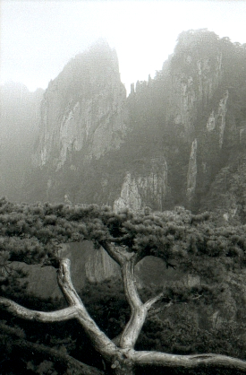 hudangshang-02-vue-arbre