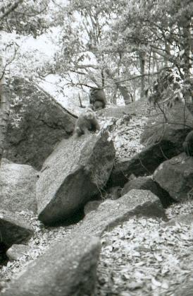 hudangshang-27-singes