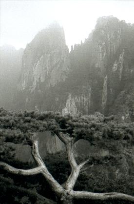 hudangshang02-vuearbre