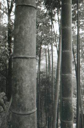 hudangshang29-bamboux