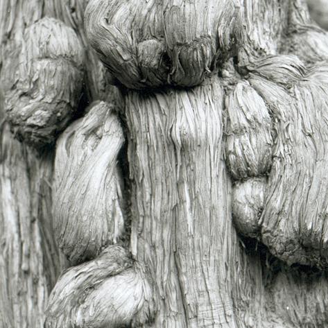 pekin-111-temple-de-confucius-detail-arbre