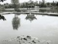 dali-01-parc-aux-3-pagodes-nnufare