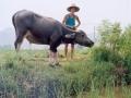 fuli21-paysan-avecbuffle