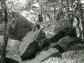 hudangshang-26-singes