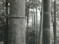 hudangshang-29-bamboux