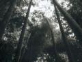 hudangshang28-bamboux