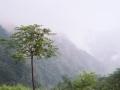 wudangshan-01-arbre