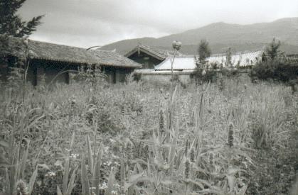 yunnan-baisha08-jardindudocteurho