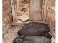 857-badami-india2011-novembre