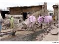 926-villagepattadakal-aihole-india2011-novembre