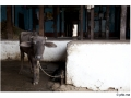 929-villagepattadakal-aihole-india2011-novembre