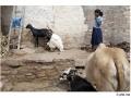 937-villagepattadakal-aihole-india2011-novembre
