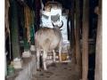 947-villagepattadakal-aihole-india2011-novembre