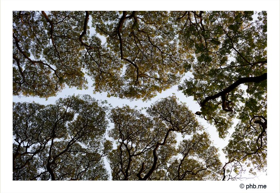 354-cochin-india2011-novembre