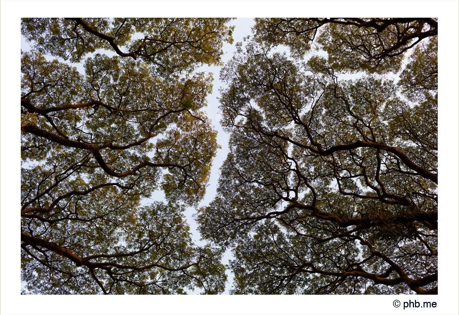 355-cochin-india2011-novembre