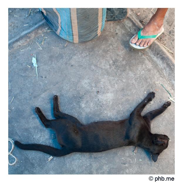 358-cochin-india2011-novembre