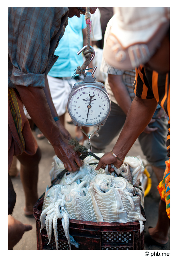 400-cochin-portcriee-india2011-novembre