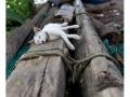 349-cochin-india2011-novembre