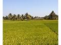 482-somnathpur-keshava-india2011-novembre
