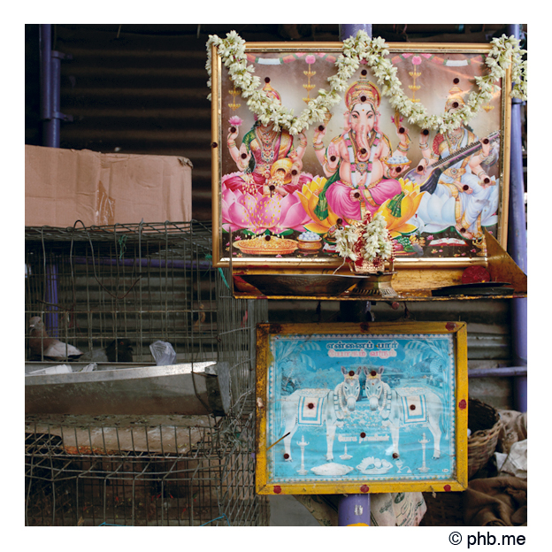 017enbaladepondi_india2011-juillet
