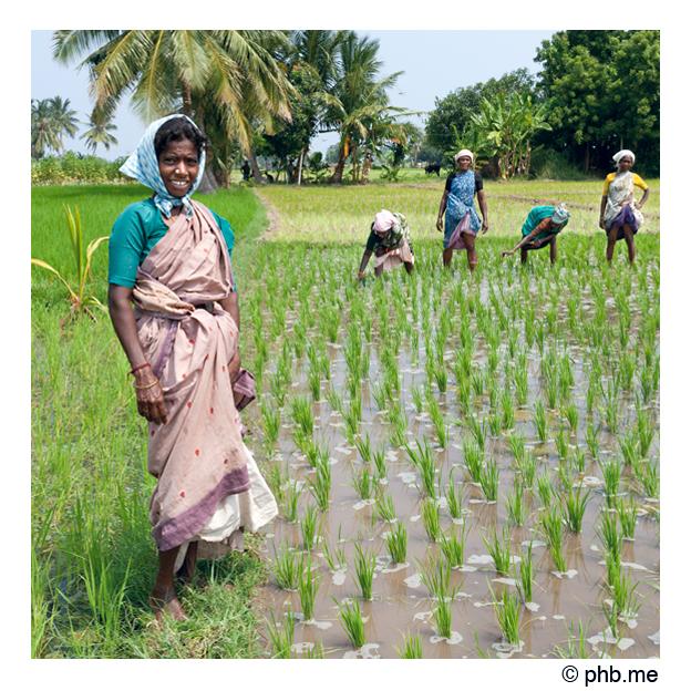 299-abutcudallore_india2011-octobre