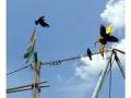 175cuddalore_india2011-sept