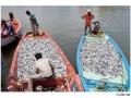 192cuddalore_india2011-sept