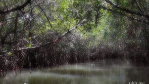 mangroveforest