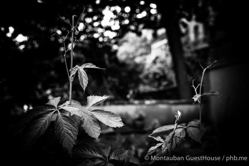 guest-Montauban-de-jardin-IMG_3964-2