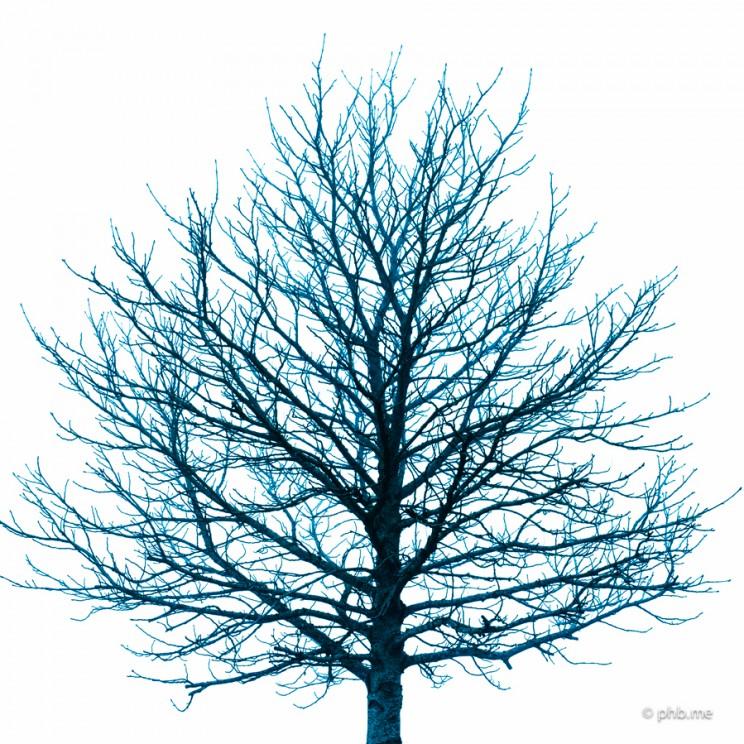 IMG_7568-phb-arbre