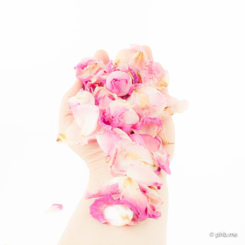 17072016-IMG_7834-2-roses-main-phb-17juillet2016