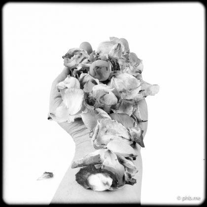 17072016-IMG_7834-3-roses-main-phb-17juillet2016