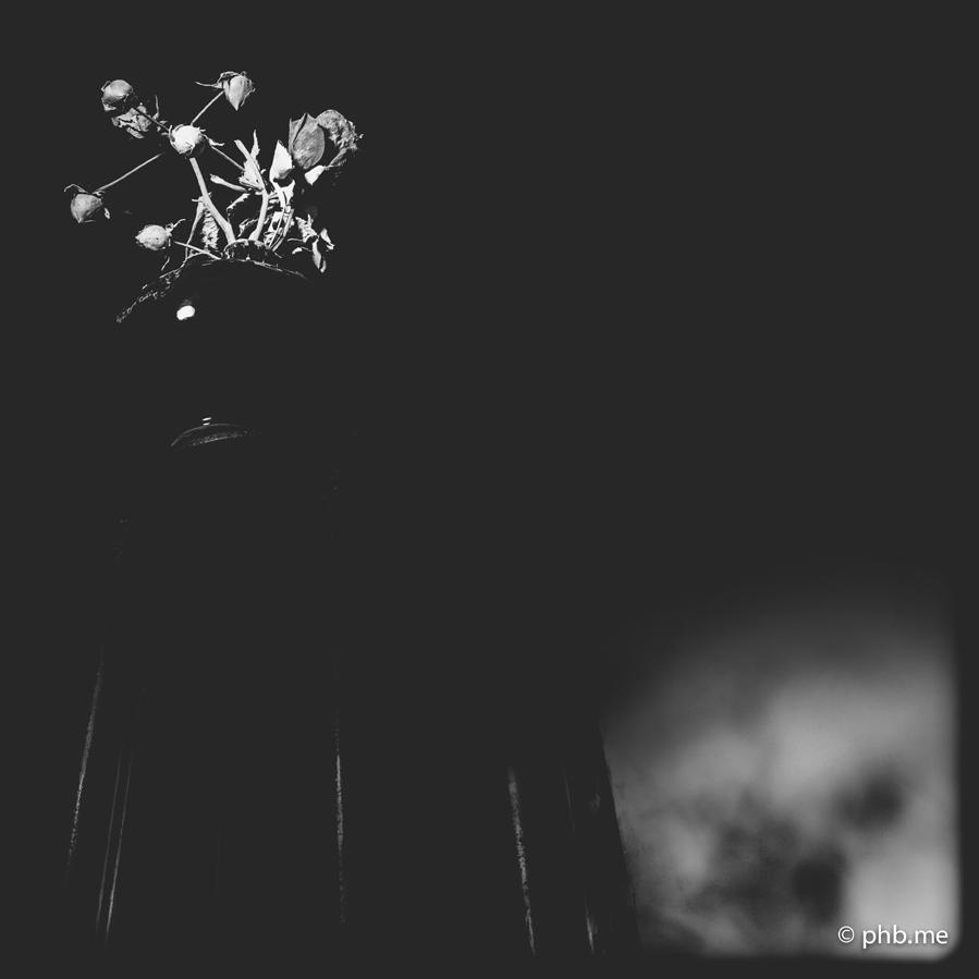 29062016-IMG_7206-rose-2014-phb