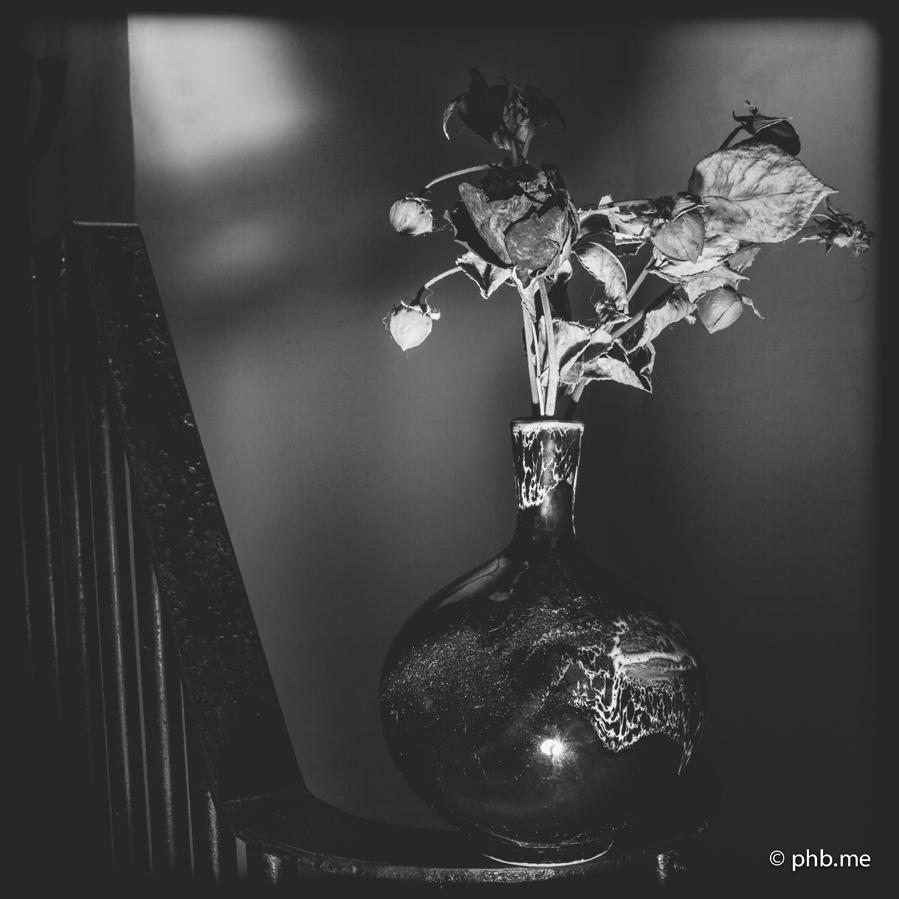 29062016-IMG_7208-rose-2014-phb