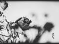 29062016-IMG_7191-2-rose-2004-phb