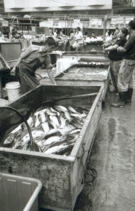 chengde06-poissonnier