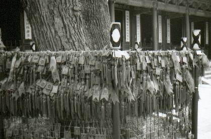 pekin-98-temple-dongyue-si-arbre-entree