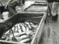 chengde-06-poissonnier