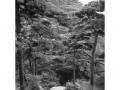 hudangshang01-chemin