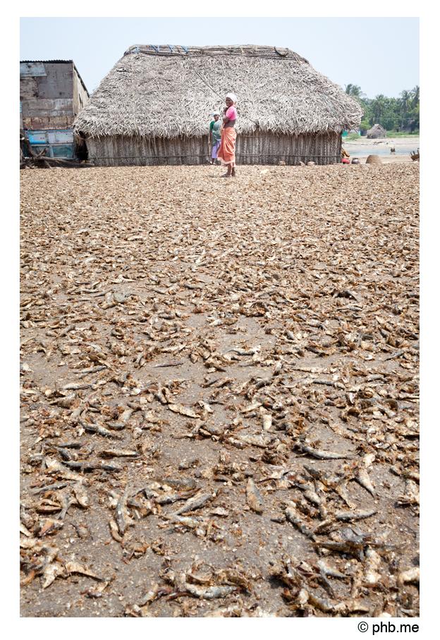 292-abutcudallore_india2011-octobre
