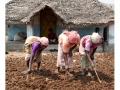 296-abutcudallore_india2011-octobre