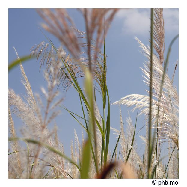 803-hampi-india2011-novembre