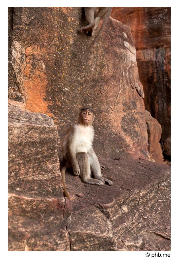 329-badami-monkey-india2011-novembre