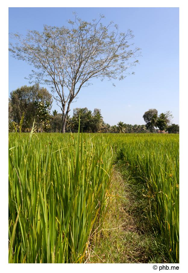 481-somnathpur-keshava-india2011-novembre
