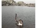 317-hampi-india2011-novembre