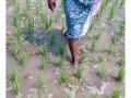 301-abutcudallore_india2011-octobre