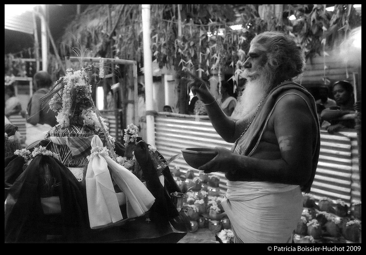 Pondicherry Brahman 008