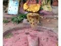 030enbaladekoitakkararey_india2011-aout